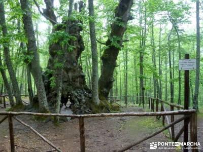 Castañar de El Tiemblo; viajes organizados madrid; viajes de un dia desde madrid;turismo por guadal